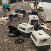 Perros rescatadps durante las lluvias de la DANA en Dolores.