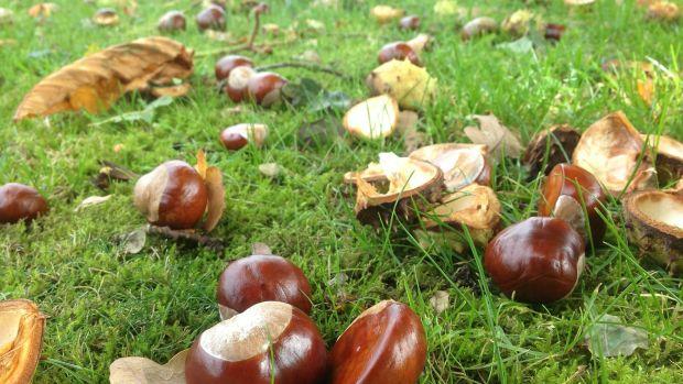 Este lunes, arranca el otoño con un aumento de las temperaturas