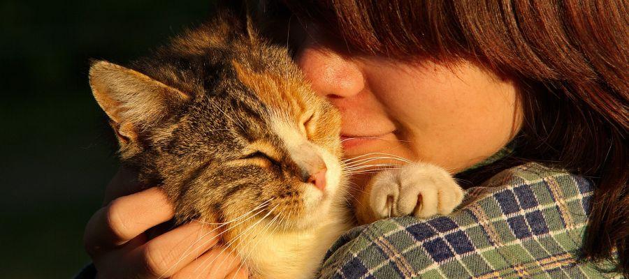 Los gatos tambien muestran apego con sus duenos
