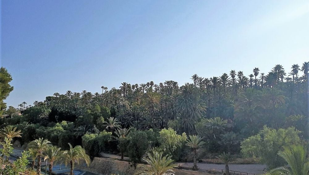 Vista del palmeral del Parque Municipal de Elche.