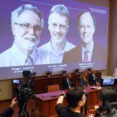 Los distinguidos al Premio Nobel de Medicina 2019