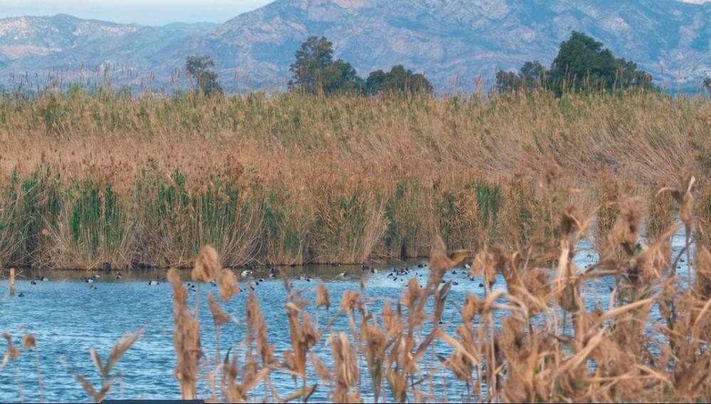 Parque Natural El Hondo Crevillent-Elche.