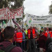 Manifestación de los olivareros en Madrid