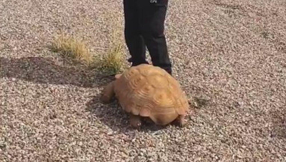 La tortuga fue hallada en una rotonda de Ciudad Real