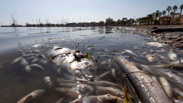 Muerte masiva del 80% de la flora y la fauna del Mar Menor