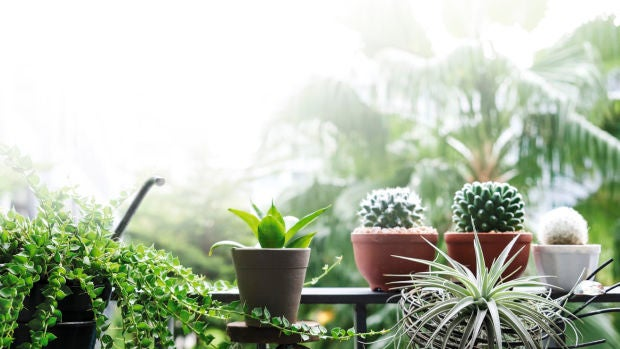 Aparici en Órbita: ¿Cómo se realiza la fotosíntesis?