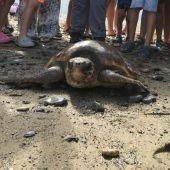 Suelta de tortugas por parte del CECAM.