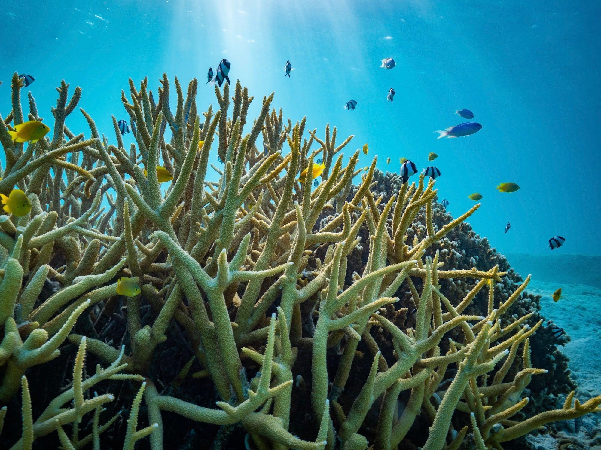 Punta Norte: ¿Qué pez puede infundir más temor que un tiburón?