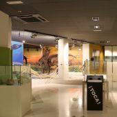 Sala expositiva del Museo Paleontológico de Elche.