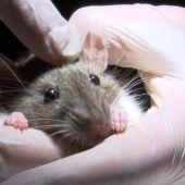 Equipo de investigación - Temporada 11 - Las ratas