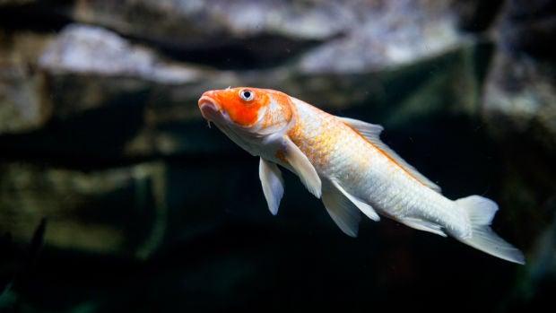 Compran un pez por 1,6 millones de euros