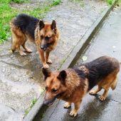 Los dos perros que buscan un hogar porque su dueño está enfermo