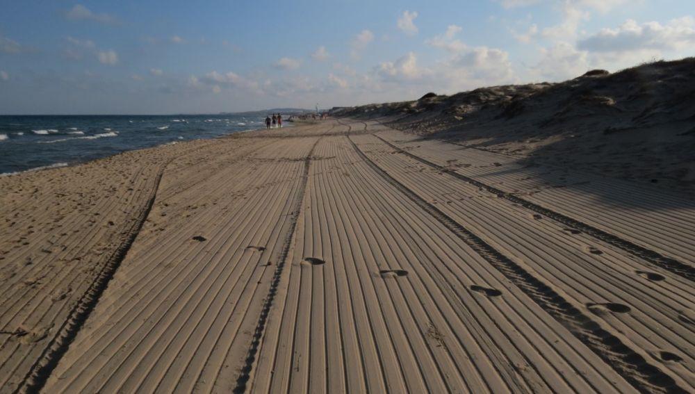Playa de La Marina de Elche tras el paso de las máquinas de limpieza.