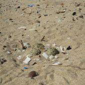 Huevos de chorlitejo patinegro en la playa de Guardamar del Segura.