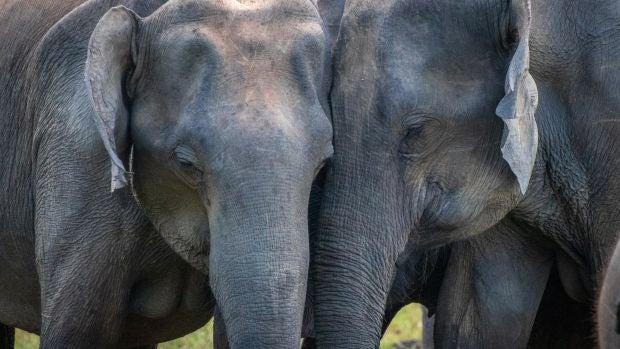 Divulga que algo queda: Cómo los elefantes han cambiado la historia de la humanidad