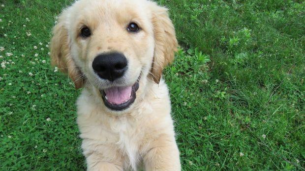 La enternecedora historia de Tao y Oko, un perro ciego que usa al otro como guía