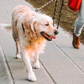 Los veterinarios consideran que los animales de compañía deben seguir su rutina diaria