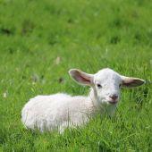 La crisis sanitaria ha provocado un descenso en el consumo de carne de ovino