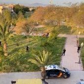 Varias unidades de la Policía Nacional y Local de Elche controlan a un caballo suelto en el barrio de Carrús.