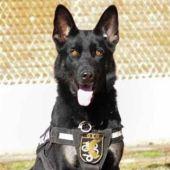 Elko, el perro de los GEO que recibió un disparo