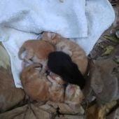Los 4 gatos recién nacidos aparecieron abandonados en Valdepeñas