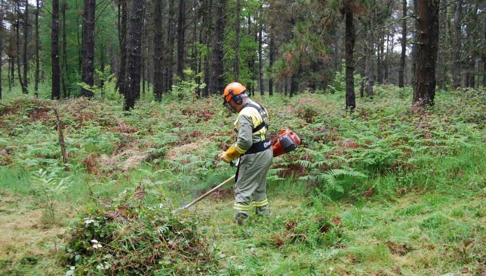 A Xunta colaborará na limpeza de máis de 15.000 parcelas