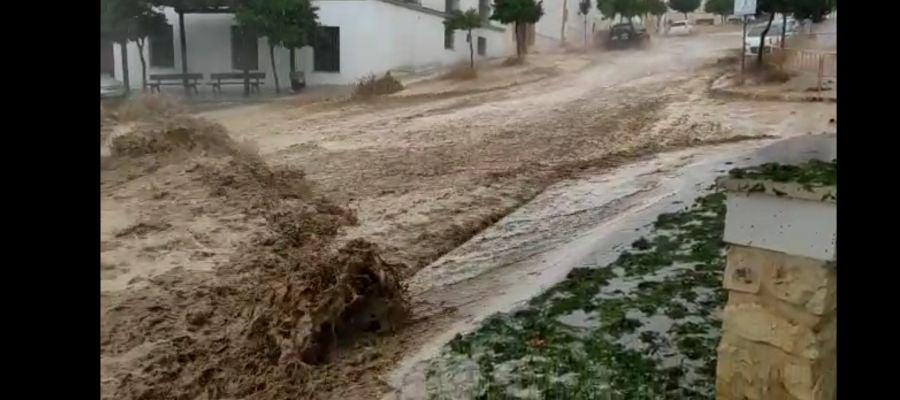 Imagen del temporal caído sobre Estepa