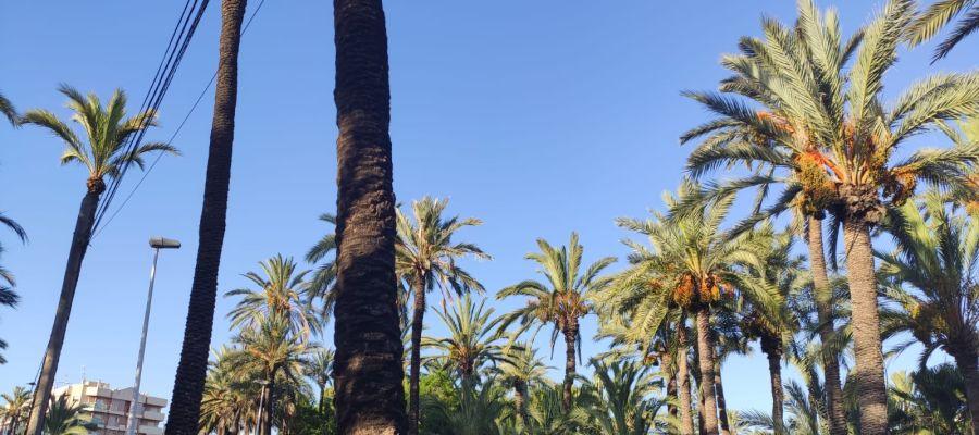 Por delante un fin de semana caluroso en Elche, Crevillent y Santa Pola
