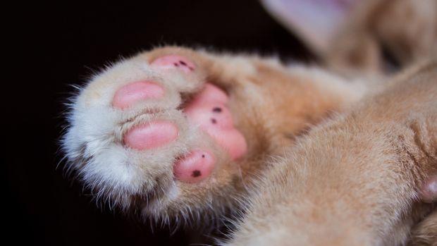 Pata de un gato