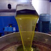 Comienza la recogida de aceituna en los pueblos de la Mancha