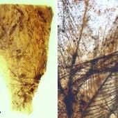 Pieza de ámbar del yacimiento turolense de San Just con restos de plumas de dinosaurio
