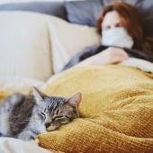 Gato en la cama