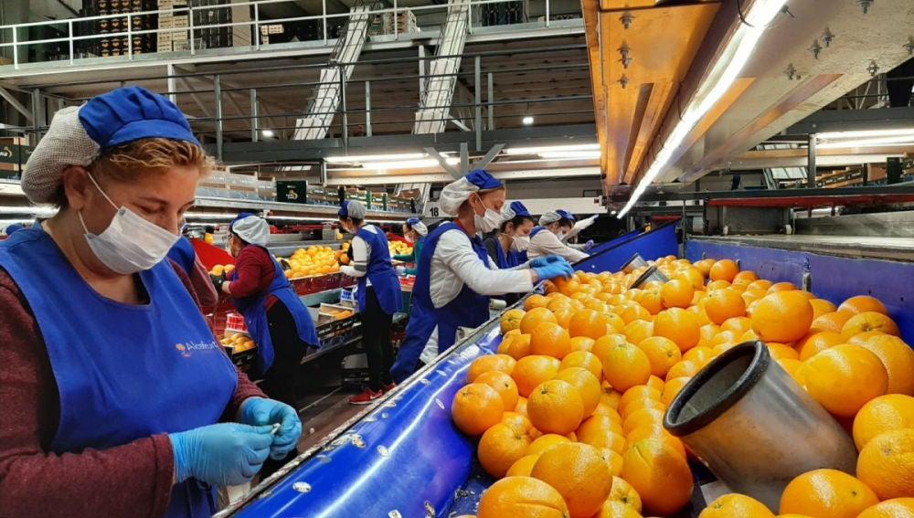 Los almacenes de naranja convocan huelga por sus horarios