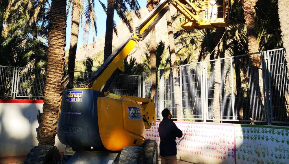 Dámaso Aparicio, ha informado que se han iniciado los trabajos de escarda y retirada de hojas de las palmeras municipales del Palmeral de San Antón