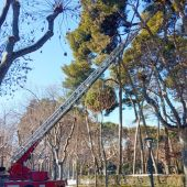 Revisión de árboles en el Parque Miguel Servet