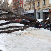 árboles caídos filomena