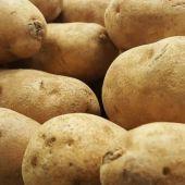 El Principado autoriza la siembra de patata en toda la región