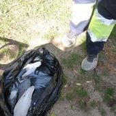 Se ha detectado la presencia de más de una veintena de ejemplares de palomas muertas en la Glorieta Gabriel Miró