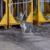 Colonia felina en la fábrica de SEAT