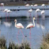 La Reserva Ornitológica de 'Los Charcones' de Miguel Esteban vive uno de sus mejores momentos