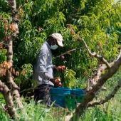 Sindicatos agrarios y alcaldes de zonas frutícolas cuestionan la orden del Gobierno de Aragón