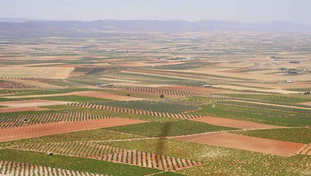 La Mancha cuenta con 154.000 hectáreas de un viñedo cada vez más diversificado