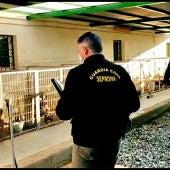 Miembros del SEPRONA intervienen un criadero de perros en Granada
