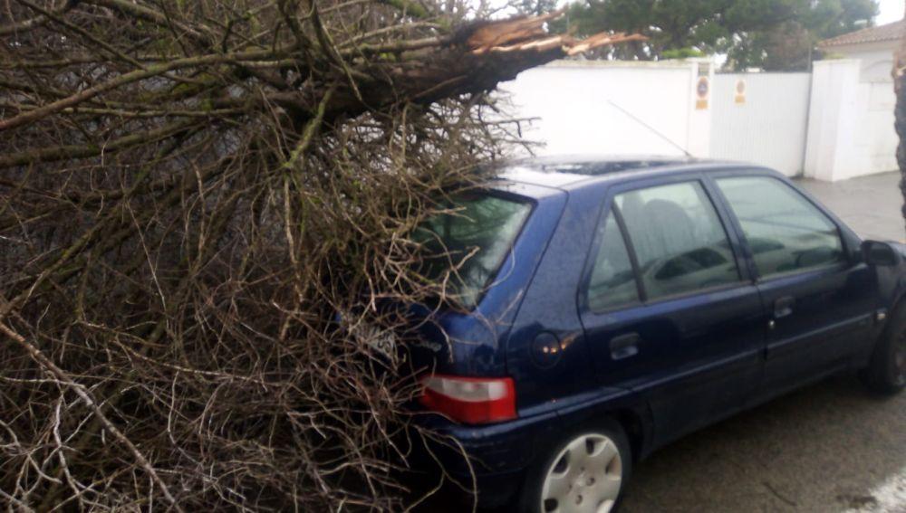 Medio Ambiente actúa en más de una treintena de incidencias por la caída de árboles o ramas esta madrugada