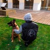 Los perros del proyecto Escan no son perros de defensa sino de compañamiento