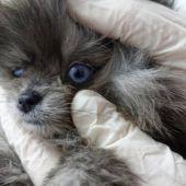 Encuentran perros muertos en un congelador y cachorros enfermos en una tienda de mascotas en Barcelona