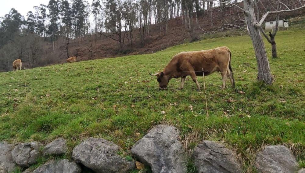 Asturias Ganadera reclama acelerar el proceso de clasificación de montes vecinales.