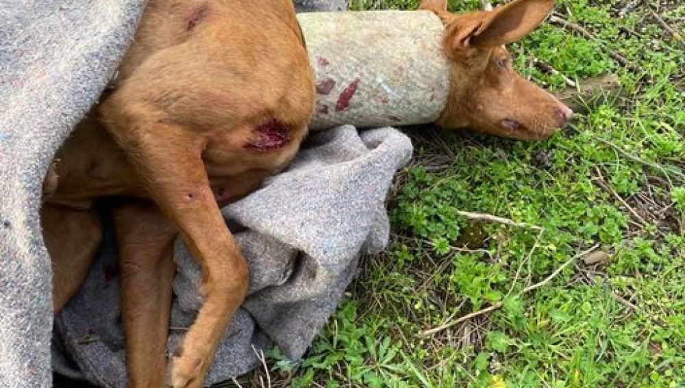 La perra fue liberada por la Policía Local