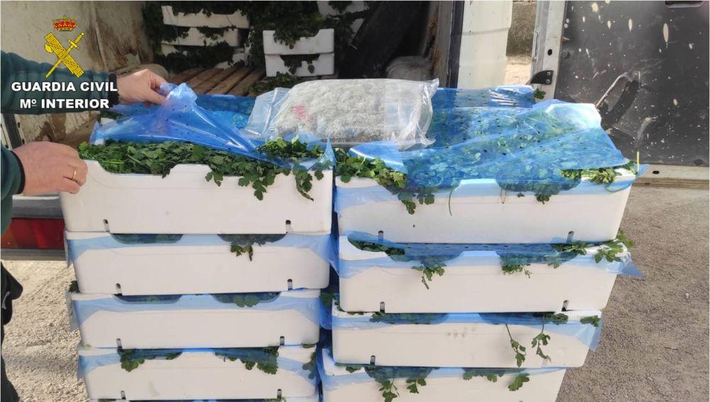 Cajas de perejil en las que los detenidos ocultaban la marihuana.