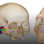 Investigadores españoles confirman que los neandertales hablaban como nosotros